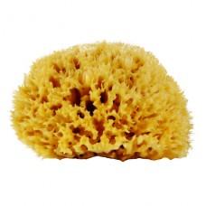 Натуральная морская губка для тела 12-14 см
